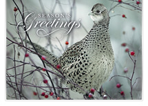 Feathered Friend Holiday Cards